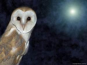 Free Barn Owl Wallpaper download