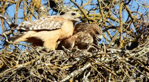 Ask a Naturalist: Why do birds build different types of nests?