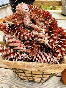 How, To, Preserve, Pine, Cones, To, Use, For, Home, Decorating