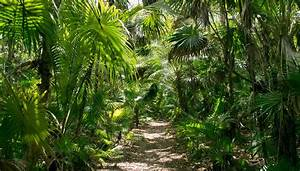 Tropical Rainforest Plants For Kids