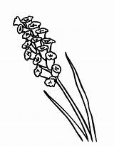 Lavender Coloring Vacuum Flower Drawing Island Simple Canary Luigi Cleaner Colouring Printable Getcolorings Drawings Designlooter Getdrawings 776px 84kb sketch template