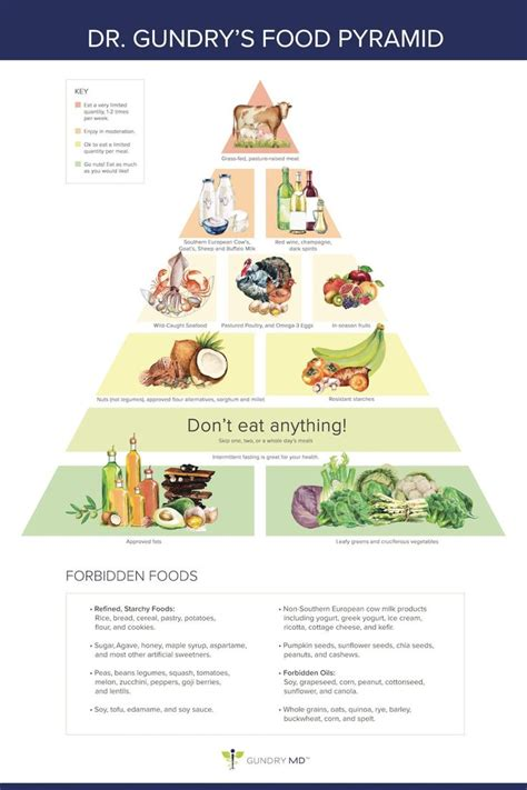 dr cuisine dr gundry 39 s food pyramid for vitality quot the plant