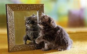 Wallpaper kitty, cat, fluffy, funny, mirror, reflection ...