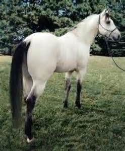 Black Buckskin Horse with White Mane and Tail