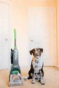 Best Affordable Carpet Cleaner For Pets