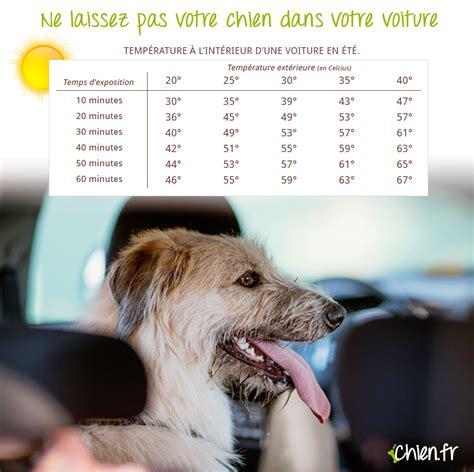 si鑒e auto pour chien pas de calais mort d un border collie enfermé dans un véhicule stationné au soleil