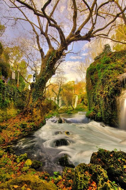 tree waterfall landscape  photo  pixabay