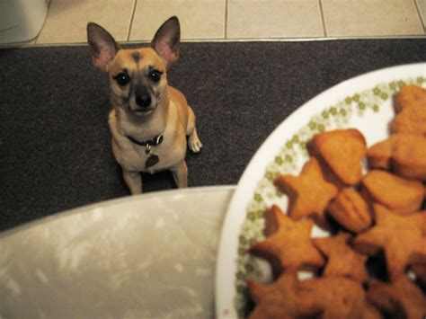 dog eating at table bible series the agapegeek blog party invitations ideas