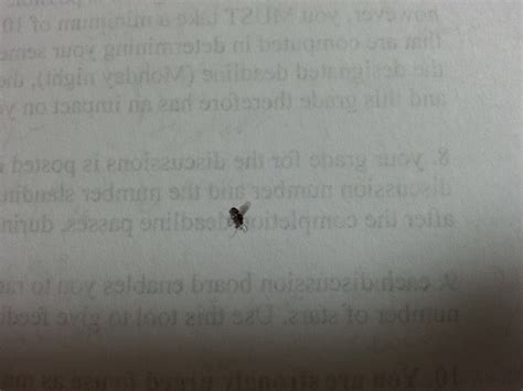 rid  flying ants  life