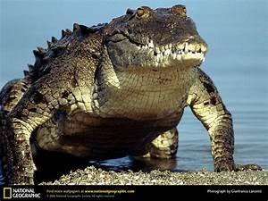 CoolidgeLifeScienceText - 4e. Reptiles