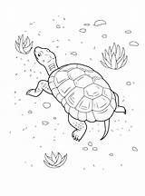 Coloring Turtle Beach Sur Tortue Plage Animal Animals Colorkid sketch template