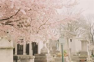 cemetery, flowers, pretty, sakura, tree - image #353112 on ...