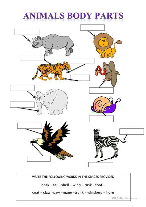 vocabulary matching worksheet elementary  animals