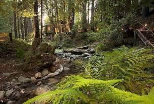 Woods Big Sur California