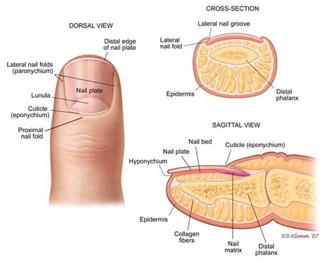 Nail Issues And Fungal Toe Care Tips - PRE-TEND Be curious