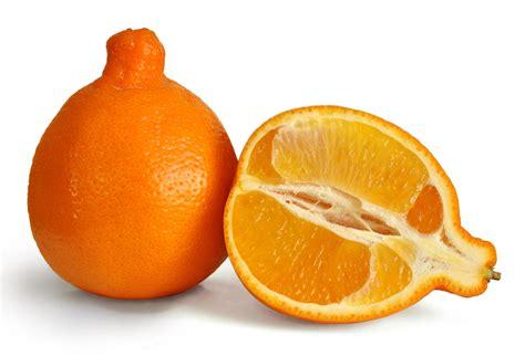 orange hybrid fruit google images