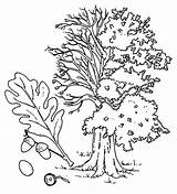 Coloring Pages Oak Seaweed sketch template