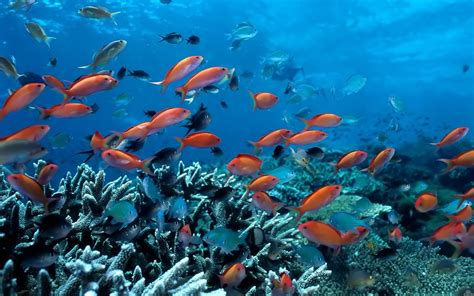 beautiful marine collagen