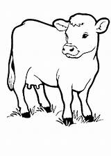 Cow Coloring Pages Animal Printable Drawing Cows Animals Outline Farm Sheep Cartoon Preschool Kidsplaycolor Sheet Drawings Books Sheets Zoo Anatomy sketch template