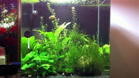aquarium 30l