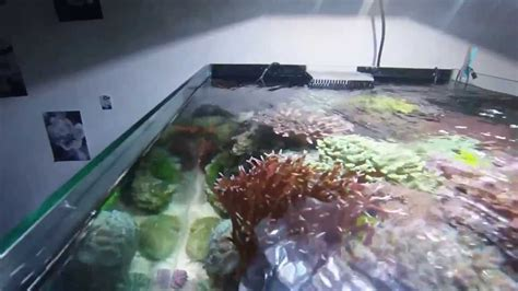 aquarium r 233 cifal eau de mer reef tank 280 l 75 g 1 an