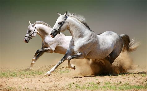 horses faster horse fast