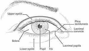 Basic Eye Anatomy