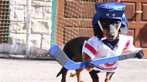 attaching  hockey uniforms  wiener dogs