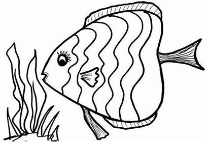 Fish Coloring Colouring Scales Pages Template Templates