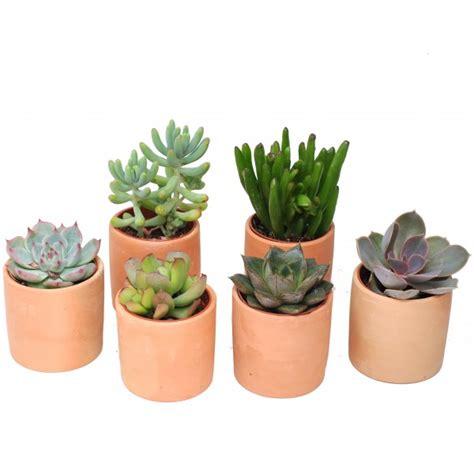 mini pot terre cuite rond 5 5 cm arr 233 e succulentes