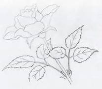 click image to enlarge  Simple Drawing In Pencil