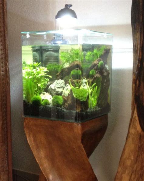 nano aquarium mit unterschrank die besten 25 kleines aquarium ideen auf kinder aquarium aquarium handwerk und