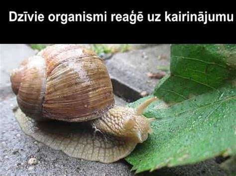 Bioloģija   STEaMup