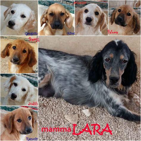 casa mamma appello per adozione mamma lara e i cuccioli cercano casa