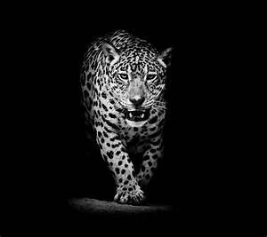 Leopard Wallpaper High Quality Resolution