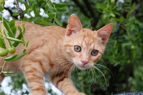 die mimik der katzen tierheilpraktikerin scharfenberg