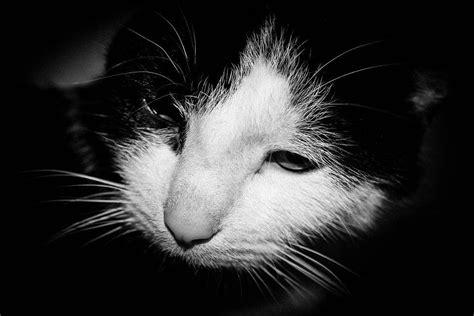 cat  dying symptoms advice