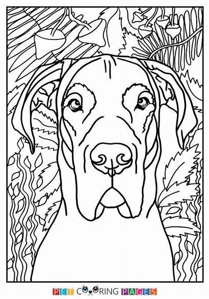 Dane Coloring Pages Colour Printables Drawings