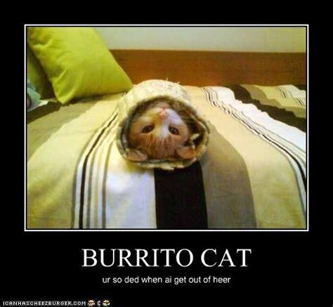 Burrito Meme - 9 cats wrapped like burritos