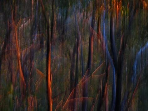 Abstract Black And White Photography Nature by Ghost Trees At Sunset Abstract Nature Photography