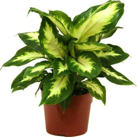 pflegeleichte topfpflanzen zimmerpflanzen die wenig