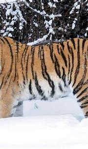Visiting Moscow zoo in winter - The Wildlife Diaries