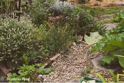 Herbs Landscaping Garden Fence Rain Water Gardening