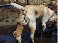 Lustige Hunde Bilder Nase im