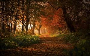 Nature, Landscape, Forest, Fall, Path, Leaves, Sunlight