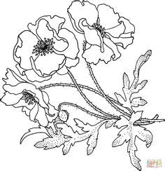 poppy flower drawing poppy clipart  susies