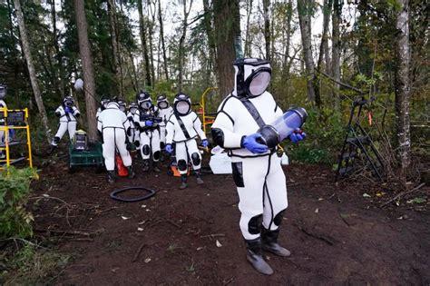 Making a murder hornet: Footage reveals inner secrets of ...