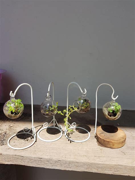mini terrarium สวนขนาดจิ๋ว