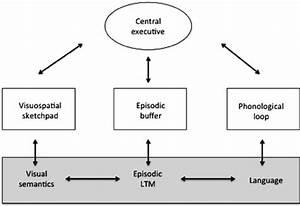 Baddeley, U2019, S, Working, Memory, Model, Baddeley, 2000, U00a9, Elsevier