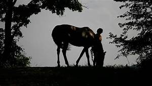 9 Things No One Tells You About Losing A Horse